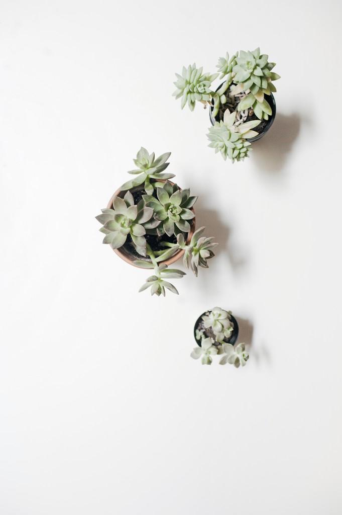 Seven Roses: About me | succulents