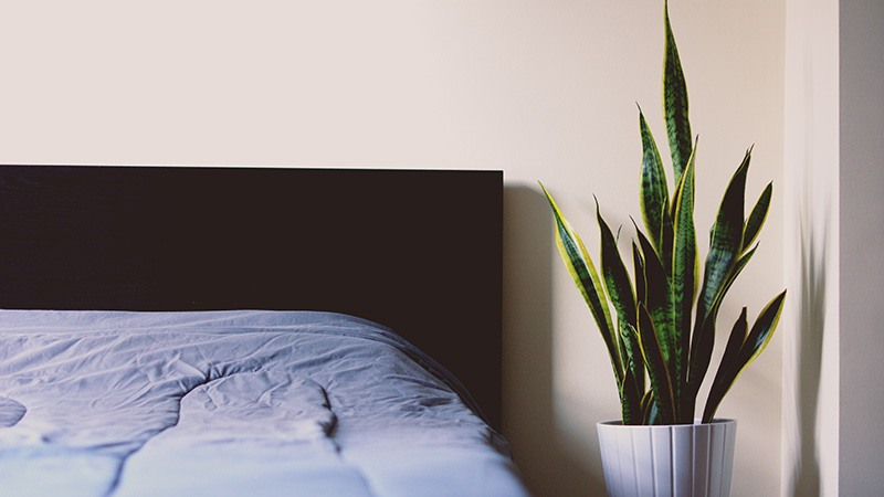 Doe Deere's Daily Morning Routine - Sleep