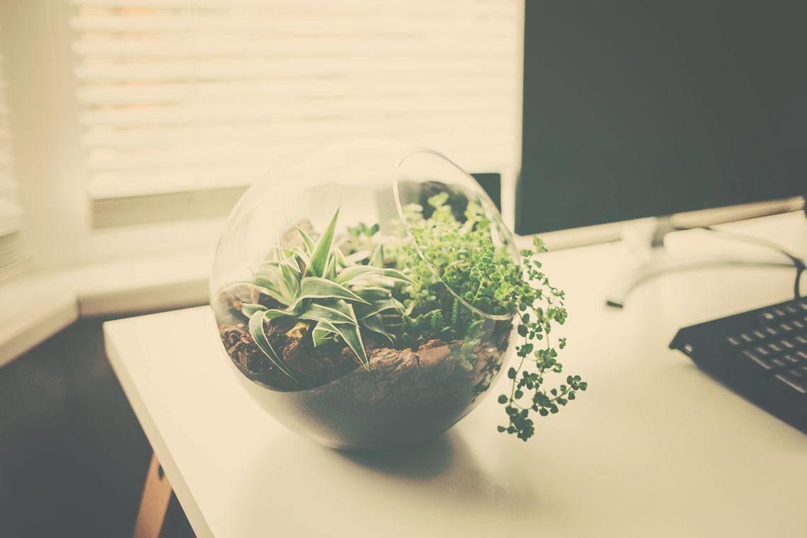 △ DIY: Succulent Terrarium Ideas △