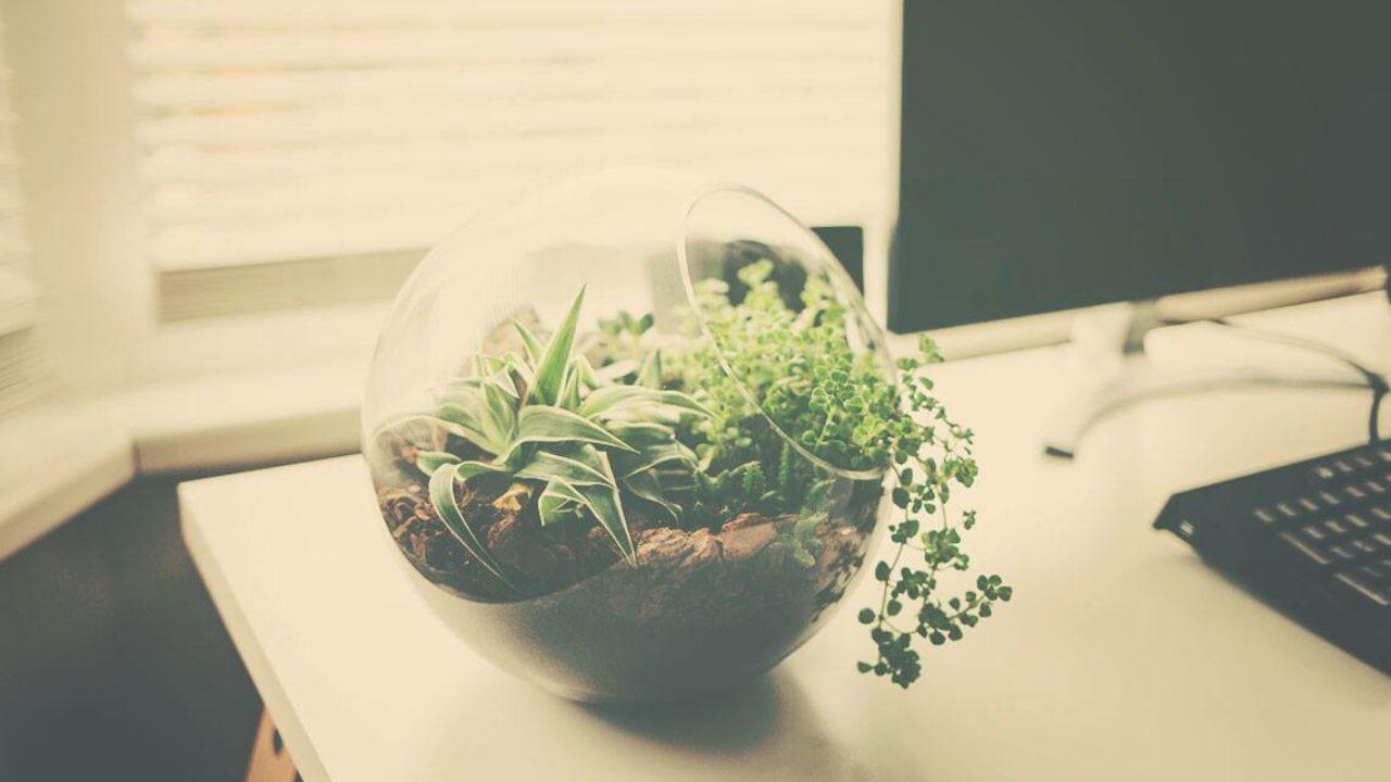 Diy Succulent Terrarium Ideas Seven Roses