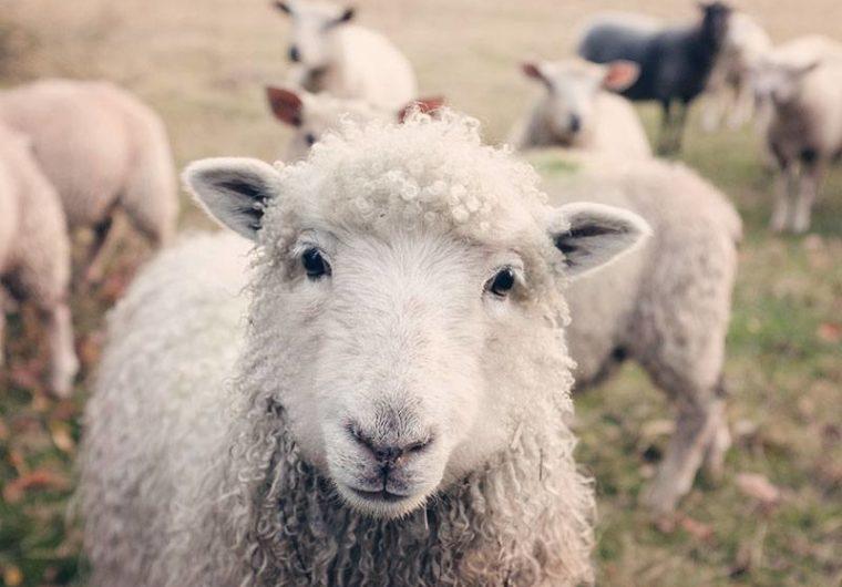 Is Veganism impacting factory farming?