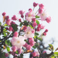 Spring moodboard + Spring lover's kit