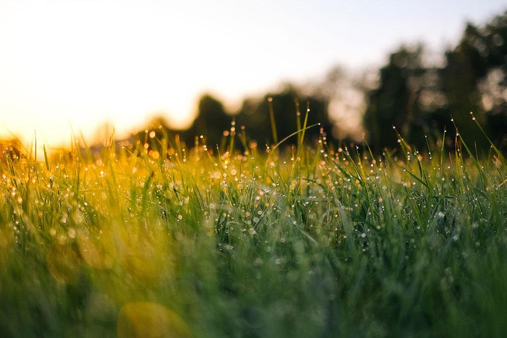 smells that make you feel happy: freshly cut grass