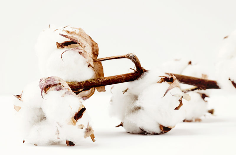 Eco-friendly fabrics: Organic Cotton