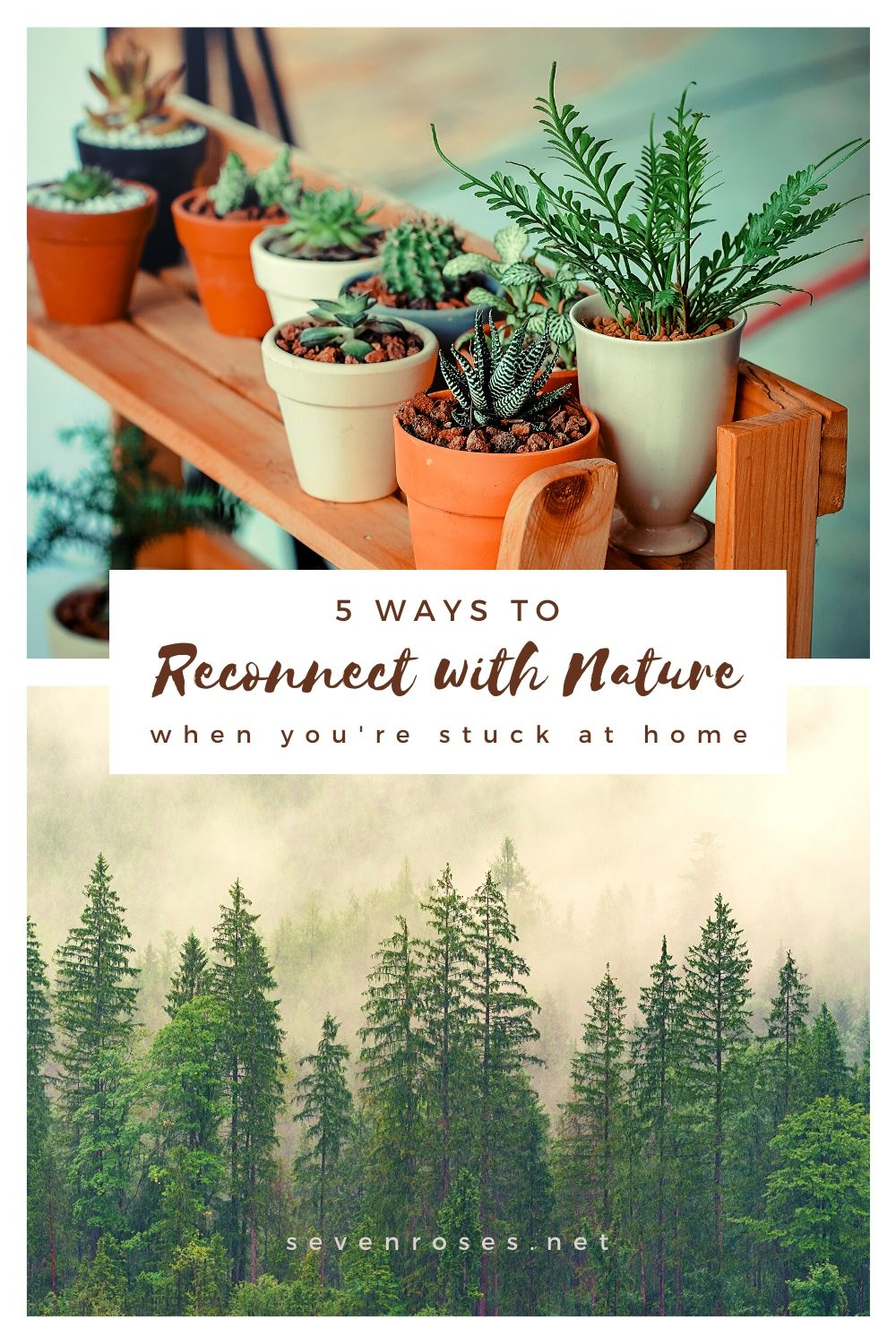 5 ways to reconnect with nature when you're stuck at home