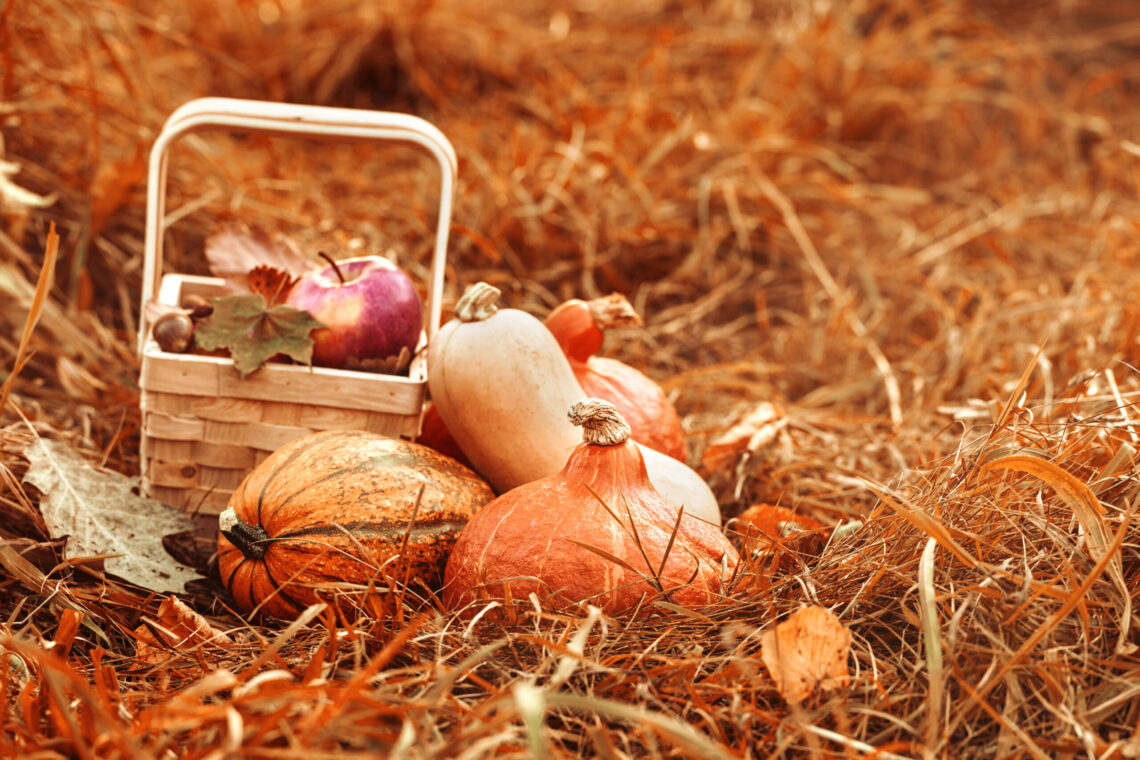 November what produce is in season
